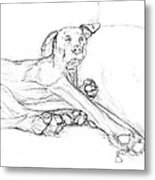 Great Dane Dog Sketch Bella Metal Print