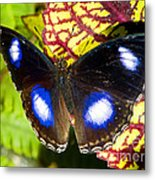 Great Eggfly Butterfly Metal Print