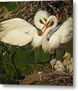 Great Egret 2am-7177 Metal Print