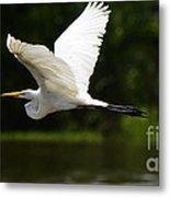 Great Egret Amazon River Metal Print