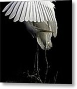 Great Egret Bowing Metal Print