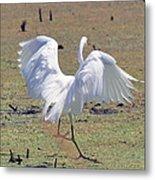 Great Egret Dancing In Auroraville Metal Print