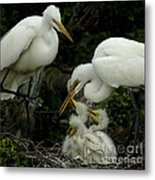 Great Egret Family 2 Metal Print