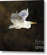 Great Egret Flying By Metal Print