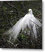 Great Egret In Tree Metal Print