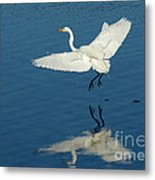 Great Egret Landing Metal Print