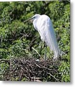 Great Egret Nest Metal Print