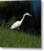 Great Egret Next To A Lake Metal Print