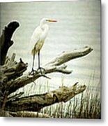 Great Egret On A Fallen Tree Metal Print by Joan McCool
