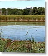 Great Egret On Berm Pond At Tifft Nature Preserve Buffalo New York Metal Print