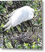 Great Egret On Nest Metal Print