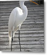 Great Egret On The Pier Metal Print