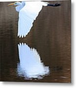Great Egret Over The Pond Metal Print