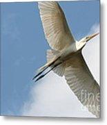 Great Egret Overhead Metal Print