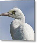 Great Egret Profile Metal Print