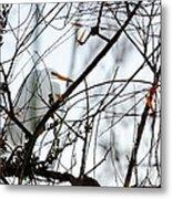 Great Egret Roosting In Winter Metal Print