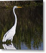 Great Egret Standing Out Metal Print