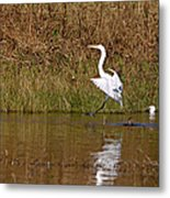 Great Egret Wing Water Reflections 3 Metal Print