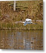 Great Egret Wing Water Reflections Metal Print