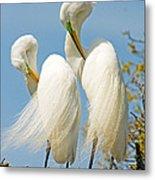 Great Egrets At Nest Metal Print