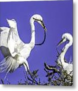 Great Egrets Nesting Metal Print