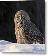 Great Gray Owl In Snow Metal Print