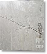 Great Gray Owl Pictures 645 Metal Print