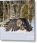 Great Gray Owl Pictures 740 Metal Print