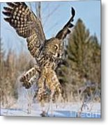 Great Gray Owl Pictures 767 Metal Print