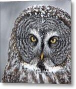 Great Gray Owl Scowl Minnesota Metal Print