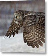 Great Grey Owl In Flight Metal Print by Jakub Sisak