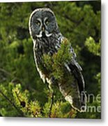 Great Grey Owl On The Hunt Metal Print