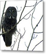 Great Grey Owl On The Lookout Metal Print