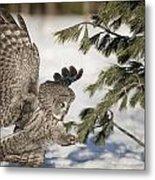 Great Grey Owl Pictures 23 Metal Print