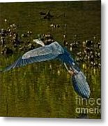 Great Heron Over Oyster Beds Metal Print
