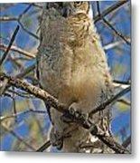 Great Horned Owl 2 Metal Print