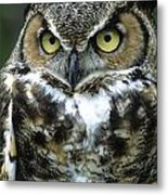 Great Horned Owl At Rest Metal Print