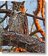 Great Horned Owl At Sunset Metal Print