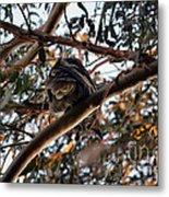 Great Horned Owl Looking Down  Metal Print