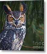 Great Horned Owl Metal Print by Mike Mulick