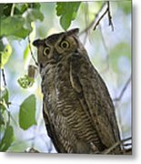 Great Horned Owl On A Branch  Metal Print