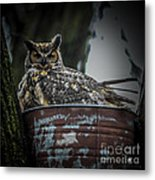 Great Horned Owl On Nest Metal Print