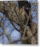 Great Horned Owl On Watch Metal Print