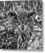 Great Horned Owl V7 Metal Print