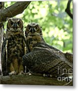 Great Horned Owls Metal Print