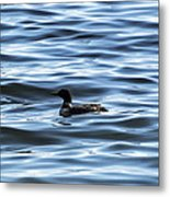 Great Northern Loon Metal Print