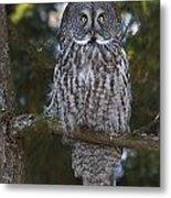 Great Owl Eyes Metal Print