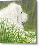 Great Pyrenees Dog In Grass Animal Pets Canine Art Metal Print