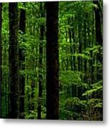 Great Smoky Mountains Forest Metal Print