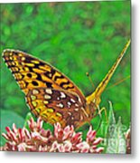 Great Spangled Fritillary Butterfly - Speyeria Cybele Metal Print